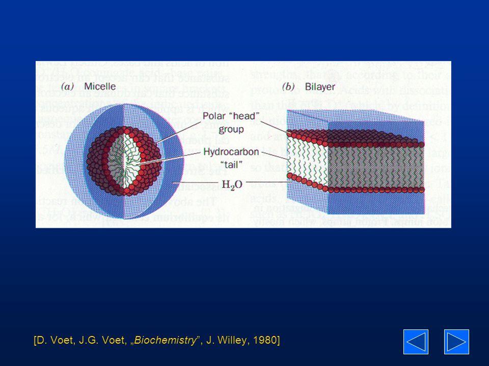 "[D. Voet, J.G. Voet, ""Biochemistry , J. Willey, 1980]"